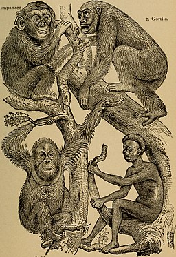 The evolution of man- a popular exposition of the principal points of human ontogeny and phylogene (1896) (14595000699)
